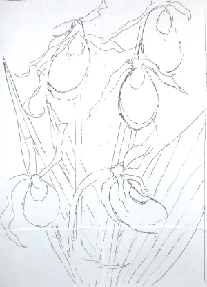 Ladyslipper drawing